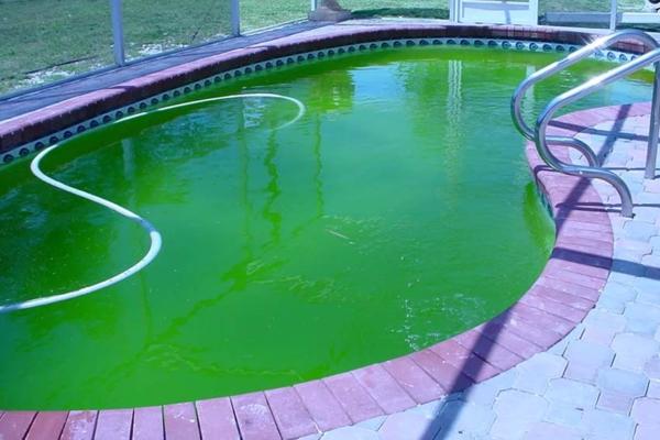 бассейн зеленая вода